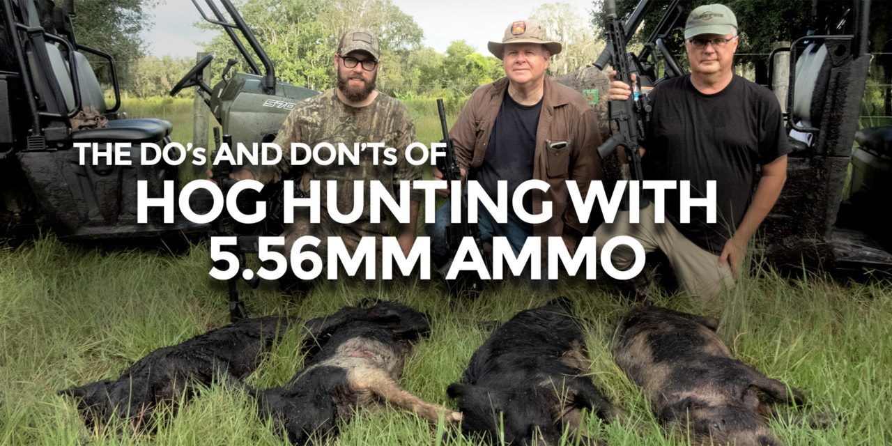 Using 5.56mm Ammo for Hog Hunting